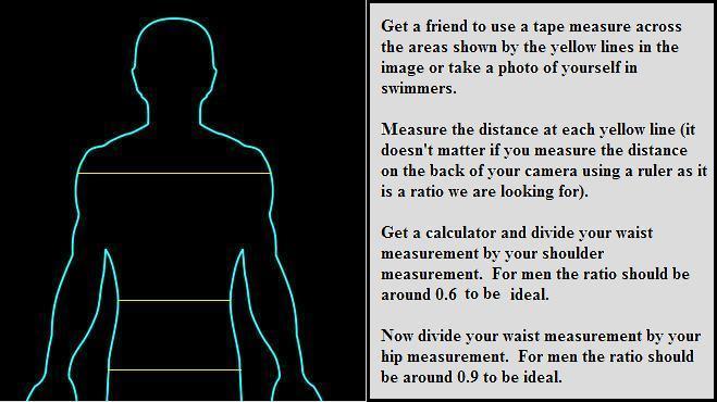 waist-to-shoulder ratio